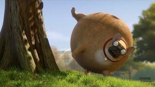 Co by było gdyby... zwierzęta były okrągłe?