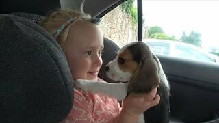 Wzuszająca reakcja dziecka i psa na widok nowego szczeniaka w rodzinie