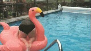 Gruba baba próbowała wsiąść na flaminga w basenie