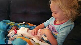 Płaczący szczeniak chce wskoczyć na kanape