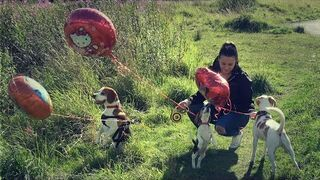 Epicka zabawa w chowanego z psami