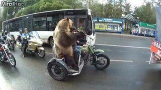 Dzień jak co dzień w Rosji. Niedźwiedź na motocyklu w korku