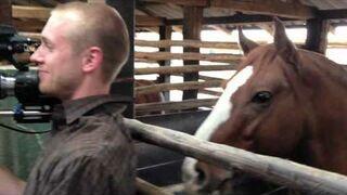 Koń śmieszkuje z kamerzysty