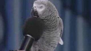 Bardzo mądry ptak!