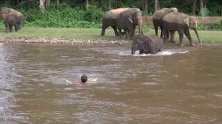 Słoń rusza na ratunek tonącemu człowiekowi