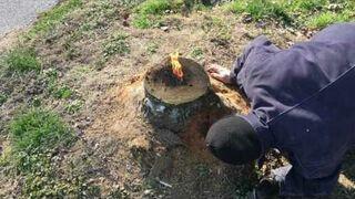 Jak pozbyć się pnia po ściętym drzewie