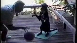 Pies gra w koszykówkę