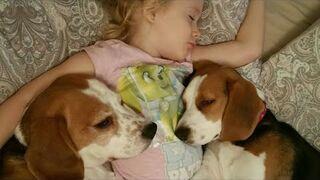 Dziecko śpioch i jej pieski przytulaski nie chcą wstać z łóżka
