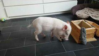 Świnka sprząta zabawki