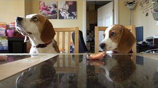 Szczeniak kontra pies w rywalizacji samokontrolii
