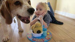 Dlaczego nie powinno się grać w ,, Mokrego Psa'' z psem