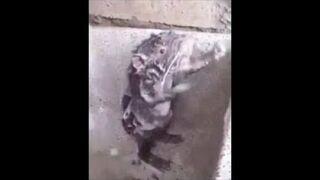 Szczurek bierze prysznic