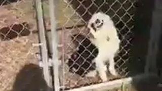Uwaga, bardzo groźny pies!