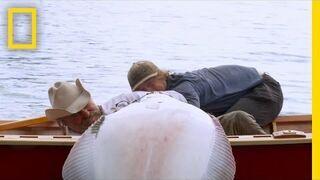 Chciał zabić wielką rybę na łodzi ronią