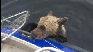 Rosyjscy wędkarze ratują niedźwiadka