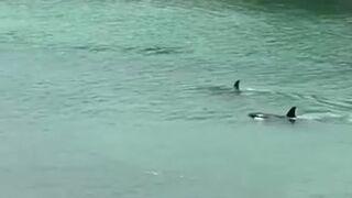 Dwie orki przepłynęły tuż obok dzieci