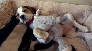 Nie ma nic słodszego, niż mały śpiący sczeniaczek