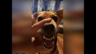 La La La Dog