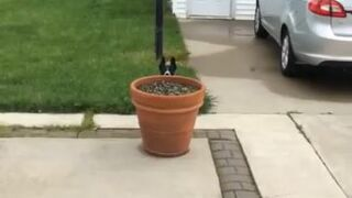 Pies bawi się w chowana z właścicielem