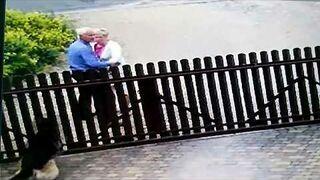 Świadkowie Jehowy i Owczarek Niemiecki