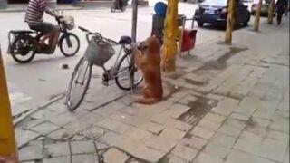 Pies w Chinach pilnuje roweru właściciela
