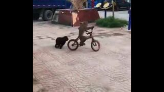 Małpa pies i rower