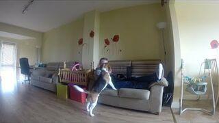 Upierdliwy pies chce na dwór