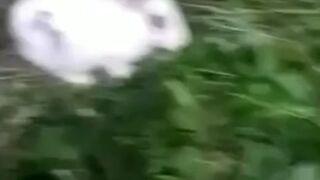 Zachowanie szczeniaka wychowanego z królikami