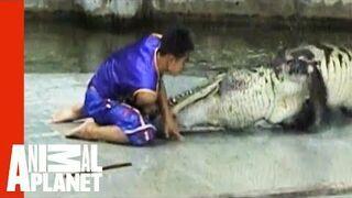 Nie drażnij krokodyla, kiedy suszy japę...