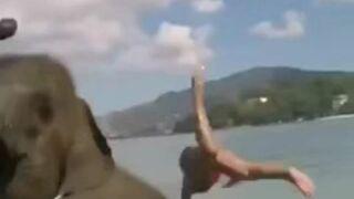 Słoń zrobił ją w trąbę
