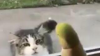 Papuga trolluje kota