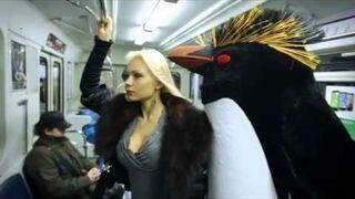 Pingwiny w rosyjskim metrze