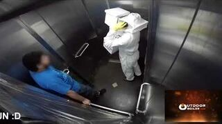 Dowcip ze pszczołami w windzie