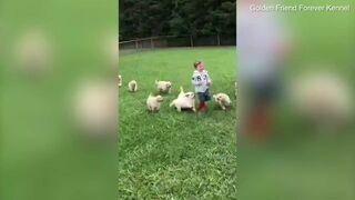Rozwścieczone psy chciały rozszarpać dzieciaka