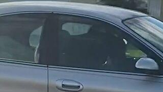 Floryda: Pies ponad godzinę jeździł w kółko samochodem