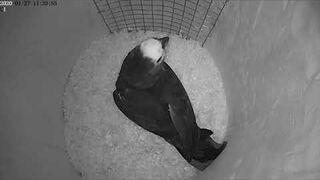 Lęgi papug #2. Przygotowanie dna w budce lęgowej.