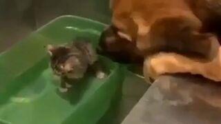 Pies głaszcze małego kotka