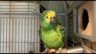 Agresywna papuga.