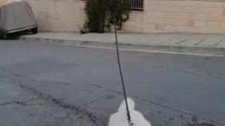 Wyprowadzanie psa na spacer dronem