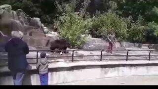 Pijany mężczyzna walczy z niedźwiedziem w Warszawskim ZOO