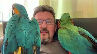 Czy papugi są niebezpieczne?