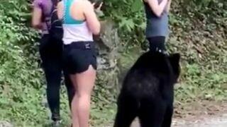 Selfie z niedźwiedziem