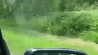 Ucieczka przed niedźwiedziem na drzewo