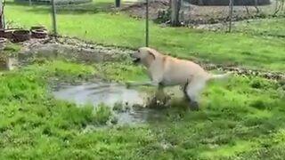 Pies brudny to pies szczęśliwy