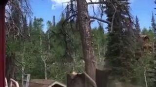 Jak prawidłowo ściąć drzewo