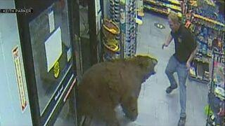 Niedźwiedź wpadł na zakupy do supermarketu. USA