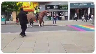 Homofobiczne konie nie chcą przejść przez tęcze LGBT