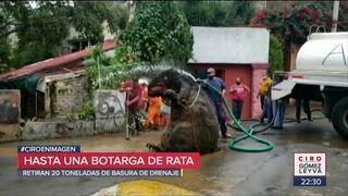 Szczur gigant wyciągnięty z kanalizacji w Meksyku!