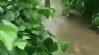 Kaczka sprytnie chowa się przed psem