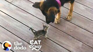Kotek zaprzyjaźnia się z psem